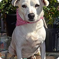 Adopt A Pet :: Blanquita - San Diego, CA