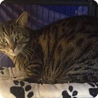 Adopt A Pet :: Timber - Sunderland, ON