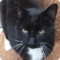 Adopt A Pet :: Andres - Chula Vista, CA