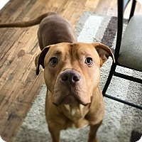 Adopt A Pet :: Salad - Grand Rapids, MI