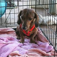Adopt A Pet :: Fritz - Tucson, AZ