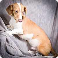 Adopt A Pet :: LOGAN - Anna, IL