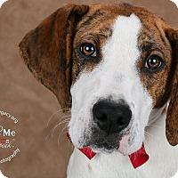 Adopt A Pet :: Larson - Cincinnati, OH