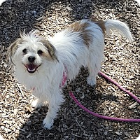 Adopt A Pet :: Lily - East Hartford, CT