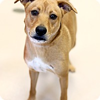 Adopt A Pet :: Mary Jane - Appleton, WI