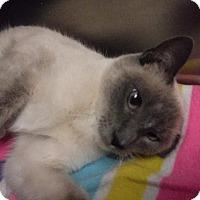 Adopt A Pet :: Sonya - Batesville, AR