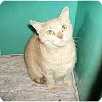 Adopt A Pet :: Katie - Boston, MA