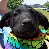 Adopt A Pet :: SMOKE - Glastonbury, CT
