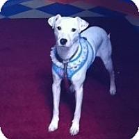 Adopt A Pet :: Daphne - Minnetonka, MN