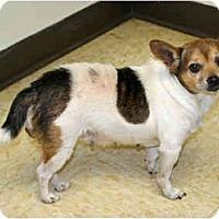 Adopt A Pet :: Secret - Racine, WI