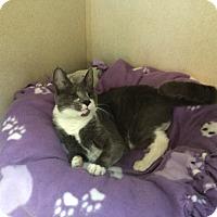 Adopt A Pet :: LIL - Hamilton, NJ