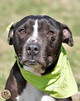 Terrier (Unknown Type, Medium) Mix Dog for adoption in Mt. Vernon, Indiana - Jack