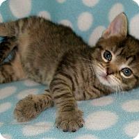 Adopt A Pet :: Eliza Schuyler - Union, KY