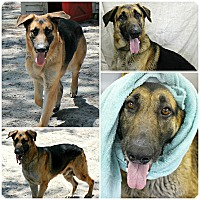 Adopt A Pet :: Zeus - Forked River, NJ
