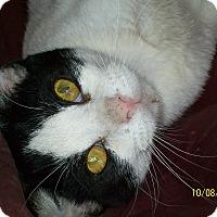 Adopt A Pet :: Butler - Mexia, TX