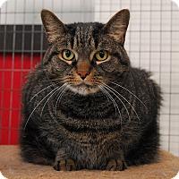Adopt A Pet :: Beau - Winchendon, MA