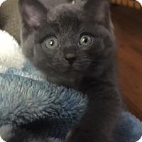 Adopt A Pet :: Rosalyn - Hamilton, ON