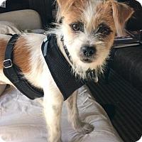 Adopt A Pet :: 'ROXIE' - Agoura Hills, CA