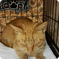 Adopt A Pet :: Robin - Melbourne, FL