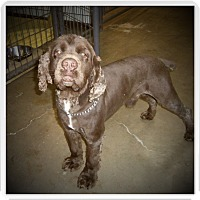 Adopt A Pet :: BENTLEY - Medford, WI