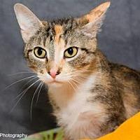 Adopt A Pet :: Cindy - Neenah, WI