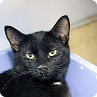 Adopt A Pet :: Bardsey - Chicago, IL