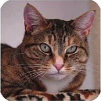 Adopt A Pet :: Romano - El Cajon, CA