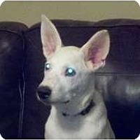Adopt A Pet :: Jackson - Glastonbury, CT