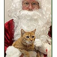 Adopt A Pet :: Sam-I-Am - North Haven, CT