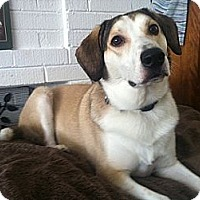 Adopt A Pet :: Scampi - Hamilton, ON
