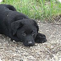 Adopt A Pet :: Peyton - in Maine - kennebunkport, ME