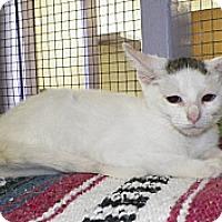 Adopt A Pet :: Frank - Dover, OH