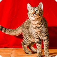 Adopt A Pet :: Emma - Athens, GA