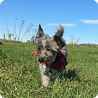 Adopt A Pet :: BUSTER - Emeryville, CA
