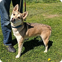 Adopt A Pet :: Eliza - Lisbon, OH