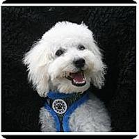 Adopt A Pet :: Tanner - Fort Braff, CA