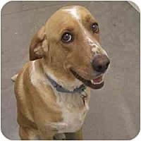 Adopt A Pet :: Connor - Phoenix, AZ