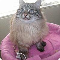 Adopt A Pet :: Kitty - Davis, CA