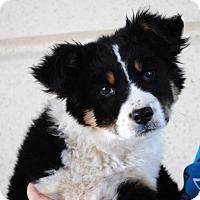 Adopt A Pet :: Wyatt - Weatherford, TX
