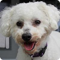 Adopt A Pet :: Nikki - La Costa, CA