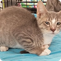 Adopt A Pet :: Annie - Cocoa, FL