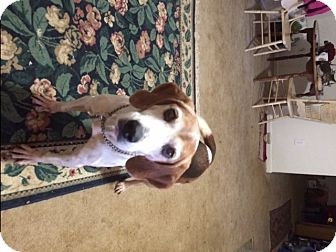 Hound (Unknown Type) Mix Dog for adoption in Stafford, Virginia - Lola