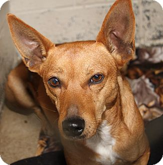 Terrier (Unknown Type, Small) Mix Dog for adoption in Marietta, Ohio - Wynn (Neutered)