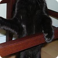 Adopt A Pet :: Chac'coh - Novato, CA