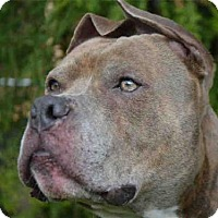 Adopt A Pet :: RADAR - Pittsburgh, PA