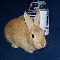Adopt A Pet :: Augustus Red - Alexandria, VA