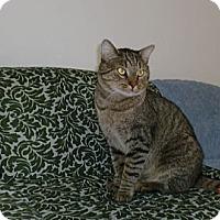 Adopt A Pet :: Ernest - San Luis Obispo, CA