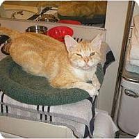 Adopt A Pet :: Maxwell - lake elsinore, CA