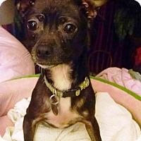 Adopt A Pet :: Moxie - Richmond, VA