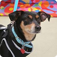Adopt A Pet :: Kandie - Adoption Pending - Gig Harbor, WA